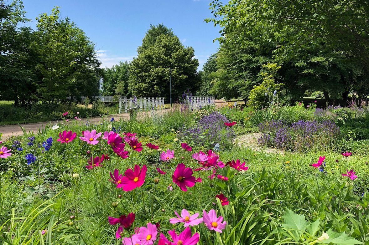 Spreeauenpark_Blumenbeet_nb